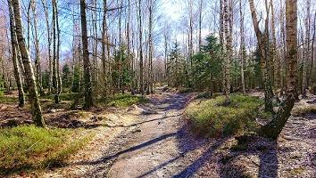 Foto Weg am Fuß des Hohen Schneeberg