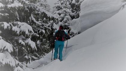 Steiler Waldgürtel, ca. 1500 Meter, noch richtig viel Schnee