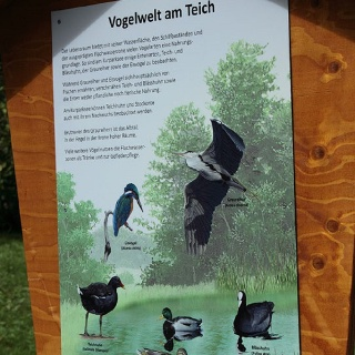 Vogelwelt am Teich