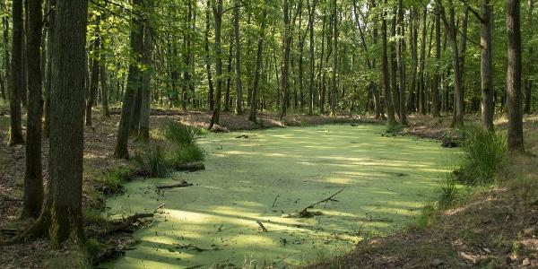 Az algaszőnyeggel bevont Felső-tó a Hegyháton