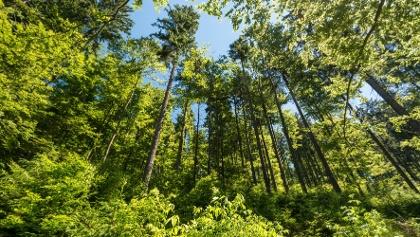 Grün bis zum Himmel - Mehr Natur geht nicht