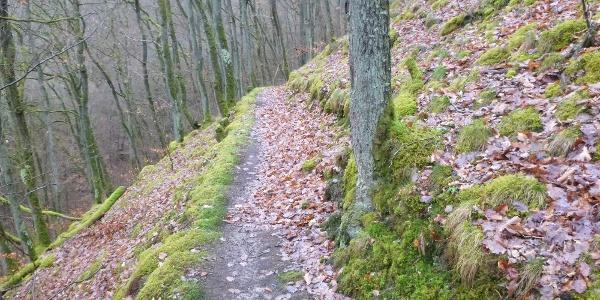 Pfad im Kautenbachtal