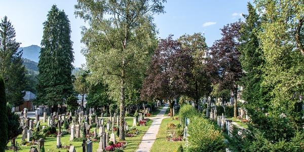 <![CDATA[Zahlreiche alte Bäume prägen den Friedhof]]>