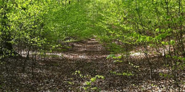unberührter Trail