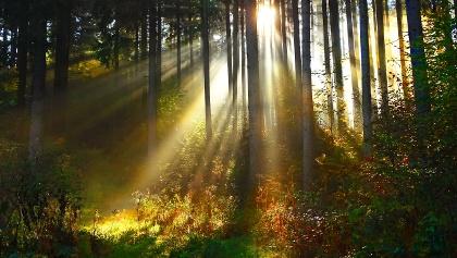 Sonnenlicht dringt durch den dichten Wald