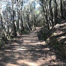 tolle Trails, meist im schützenden Schatten