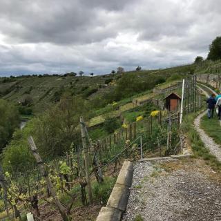 Weg über den Steillagen von Mühlhausen