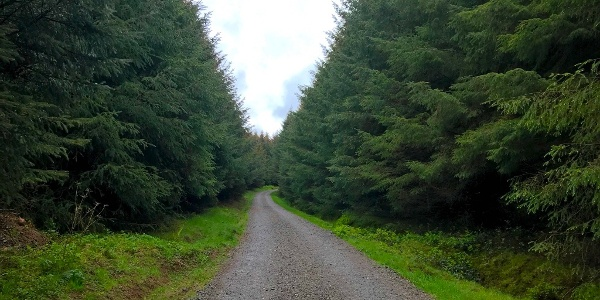 Forested Walk