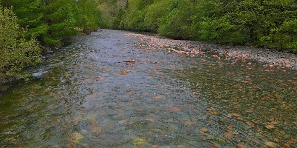 River Liza