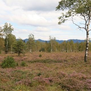 Heide im Niedermoorgebiet Bodenmöser