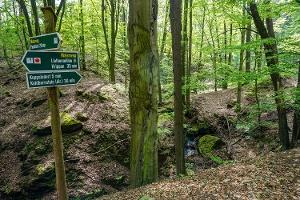 Foto Die idyllische kleine Schlucht mit dem Liethenbach bei Kleinhennersdorf