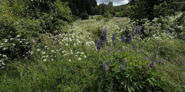 přírodní rezervace Pahorek u Vržanova