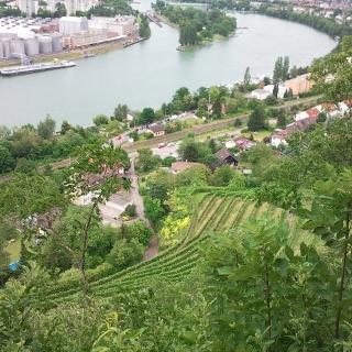 Rebberg und Rhein