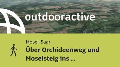 Wanderung in Mosel-Saar: Über Orchideenweg und Moselsteig ins Weinlokal