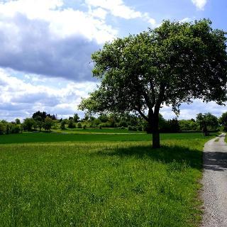 Vom Naturfreundehaus zum Michaelsberg