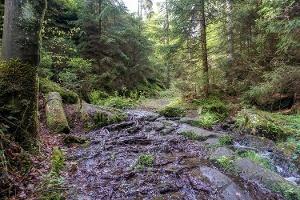 Foto Der Wanderweg führt durch den Gelobtbach