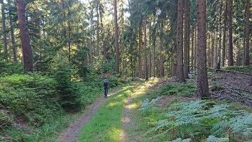 Foto Finsterwäldchen Weg