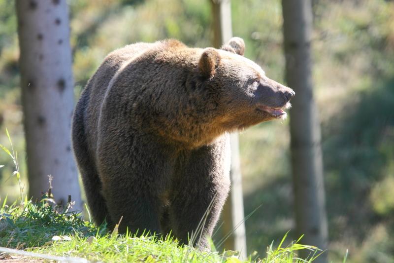 Bad Rippoldsau/Schapbach - Zum Wolf- und Bärenpark über die Höll