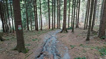 Foto Abstieg in Bielatal