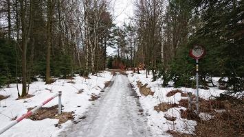 Foto Forststraße zu den Tyssaer Wänden