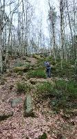 Foto Aufstieg aus dem Bielagrund (Forststeig)