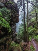 Foto Mystische Stimmung bei Regen in der Dorfbachklamm