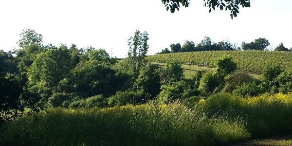 Landschaft am Küstenweg Flonheim