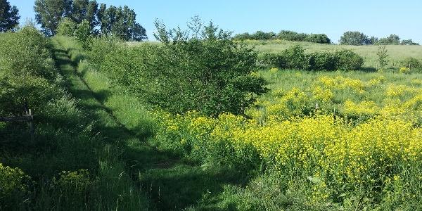 Naturnaher Wanderweg am Küstenweg Flonheim