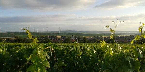 Blick auf Flonheim vom Küstenweg