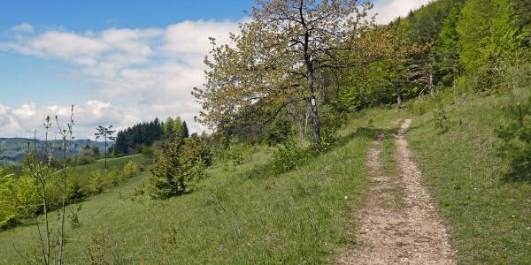 Im Naturschutzgebiet Mehlbaum