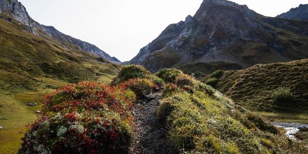 Der Pfad führt über kleine, bewachsene Hügelchen entlang des Baches (6).