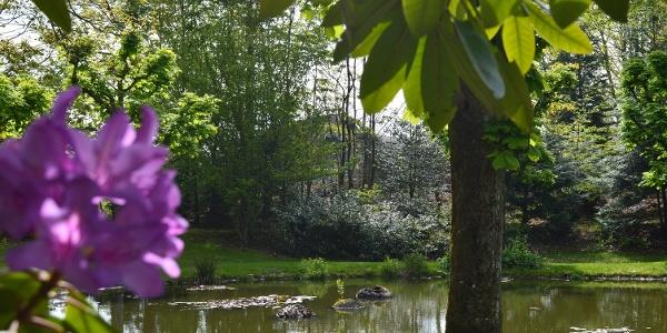 Im Sommer blühen auf dem Teich farbenfrohe Seerosen