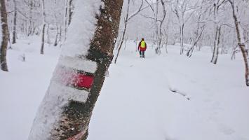 Foto Aufsteig auf den Hohen Schneeberg