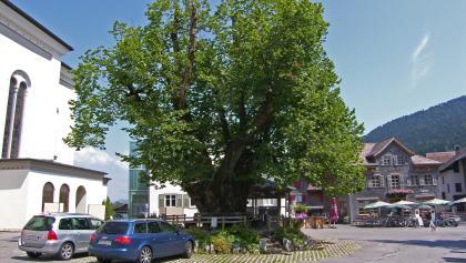 Die Dorflinde in Alberschwende