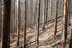 Foto Der von Borkenkäfern völlig zerstörte Fichtenwald am Reitsteig/Thorwalder Wände