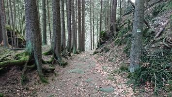Foto Abstieg in Kinitzschtal