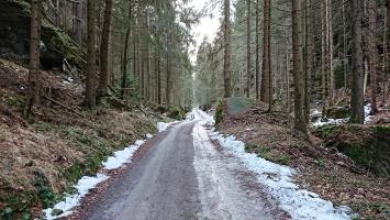 Foto Forststraße in den Kleinen Zschand