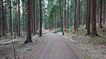 Foto Forstweg zum Kuhstall