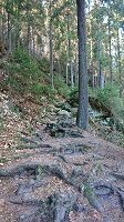 Foto Aufstieg aus dem Polenztal