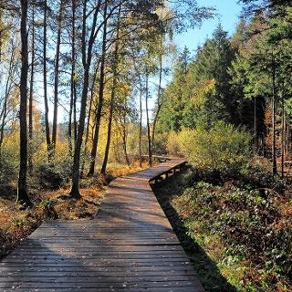 Steg im Bannwald
