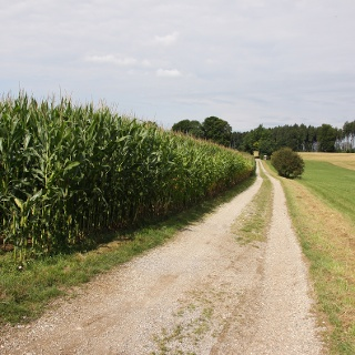 Entspannt zwischen Feldern und Wiesen radeln.