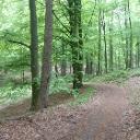 Durch den dichten Wald