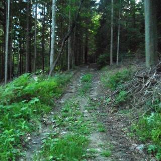 Weg auf den Zigöllerkogel