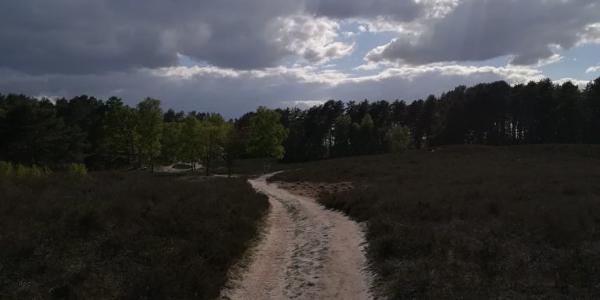 Trail in der Gifhorner Heide