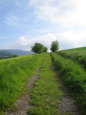 Remigius Wanderweg bei Oberstauffenbach (Foto: Julia Bingeser, Quelle: Fremdenverkehrszweckverband Landkreis Kusel)