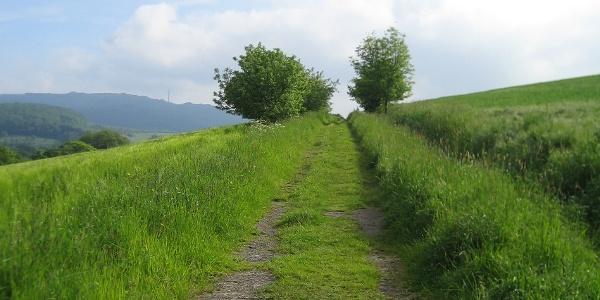 Remigius Wanderweg bei Oberstauffenbach