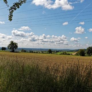 Oberhalb Gauangelloch - Blick auf die Rheinebene