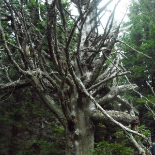 Mystischer Baum