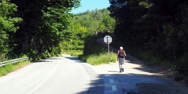 Rechts ab auf die Forststraße (700m)