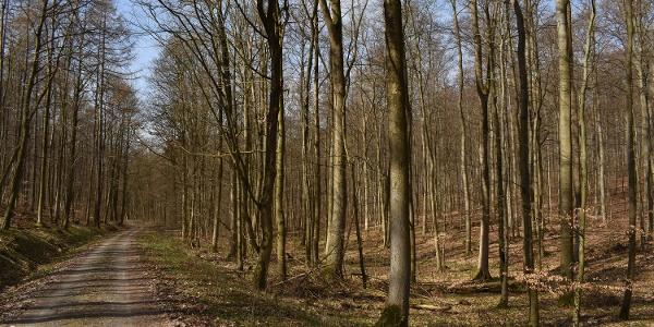 In den Wäldern der Osterköpfe, rund um den Kalkofen, wachsen viele Baumarten wie Eschen, Spitz- und Bergahorn, Kirschen, Ulmen und Buchen